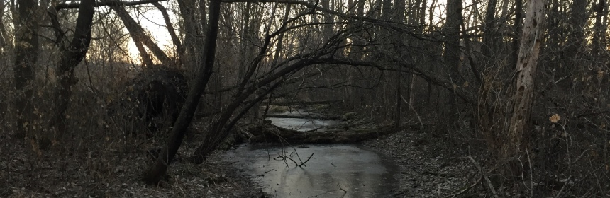 Dawn in the woods over a creek in winter